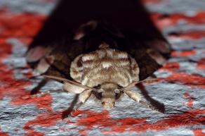 moth butterfly macro