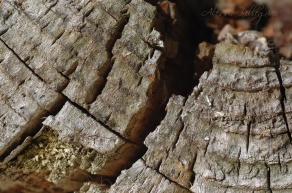 ancient wood macro